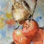 Grive Litorne Et Pommes Rouges